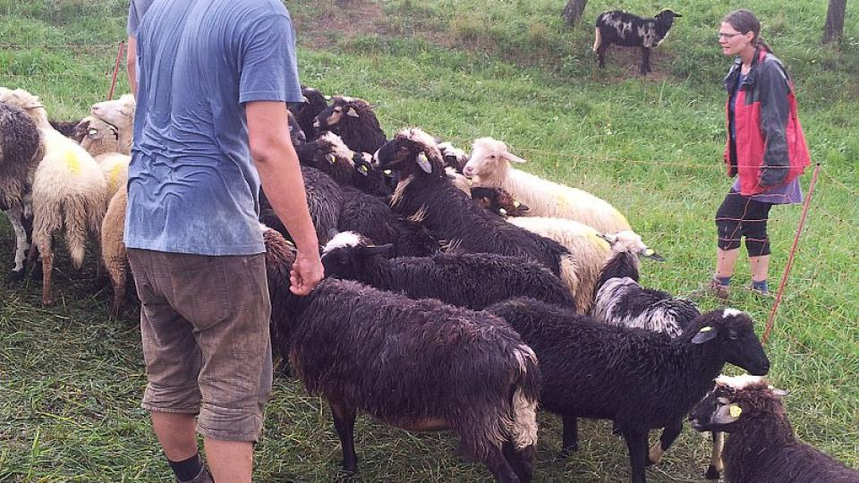 Alfons a jeho žena Julia se rozhodli začít s farmařením