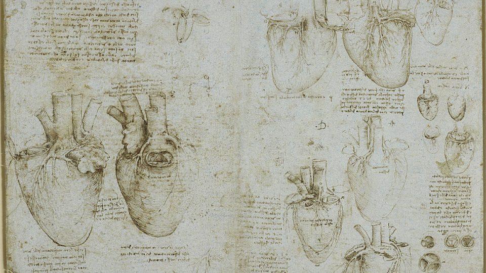 Leonardo da Vinci: Studie srdečních chlopní, asi 1511–1513