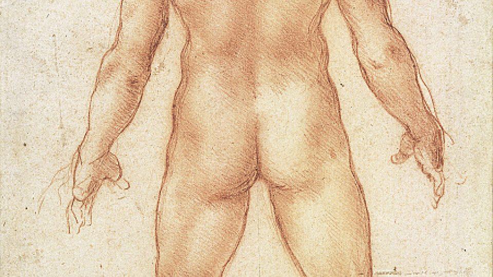 Leonardo da Vinci: Mužský akt zezadu, asi 1504–1506