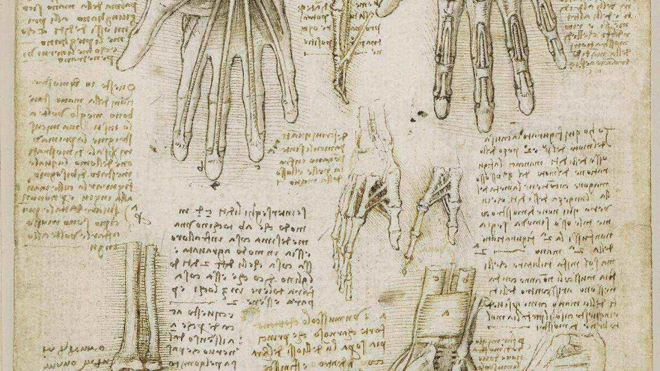 Leonardo da Vinci: Kosti, svaly a šlachy v ruce, asi 1510
