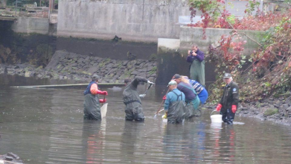 Rybáři zachraňují ryby