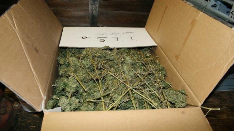 Pěstírna marihuany