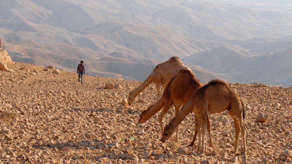 Velbloudi jsou považováni za drahá zvířata, ukazují proto i postavení majitele