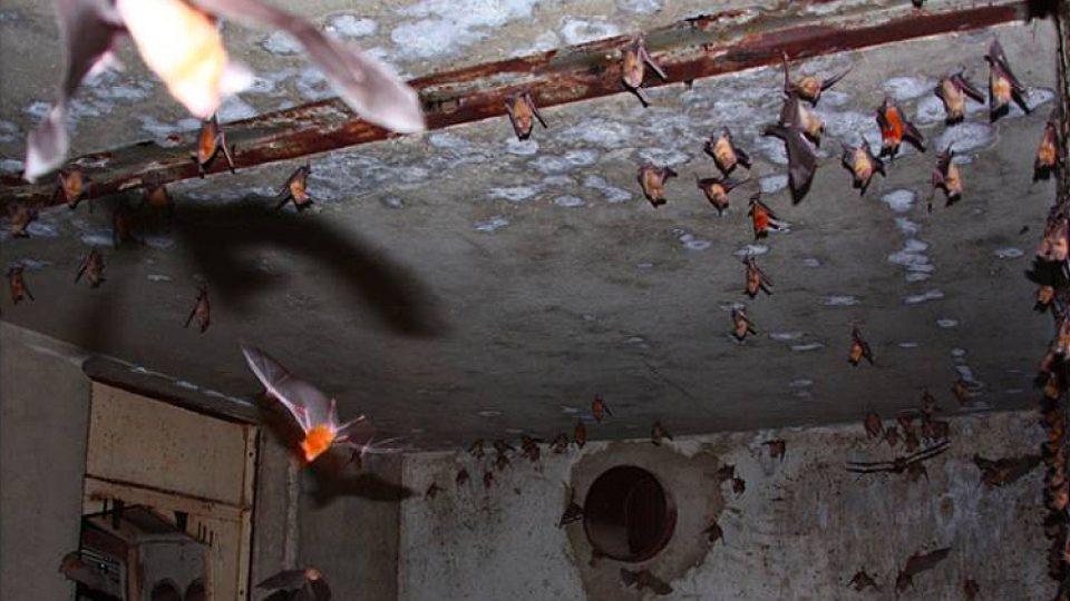 Podzemní prostory nabízejí netopýrům netušené možnosti