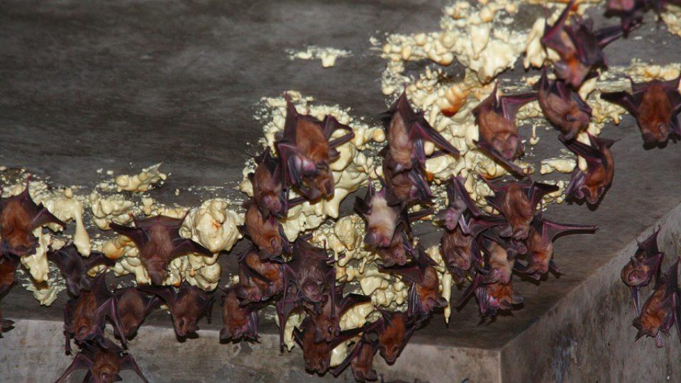 Do opuštěných bunkrů se naučily létat desetitisíce netopýrů z celé Svaté země