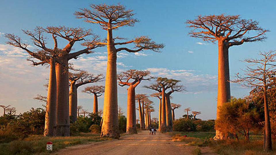 Na vanilkový ostrov Madagaskar za usměvavými lidmi - baobaby