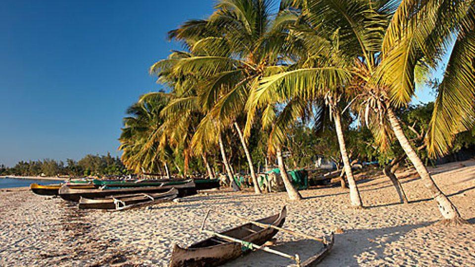 Na vanilkový ostrov Madagaskar za usměvavými lidmi - palmy