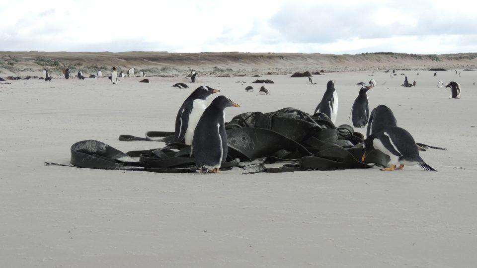 Tučňák, kam se podíváš