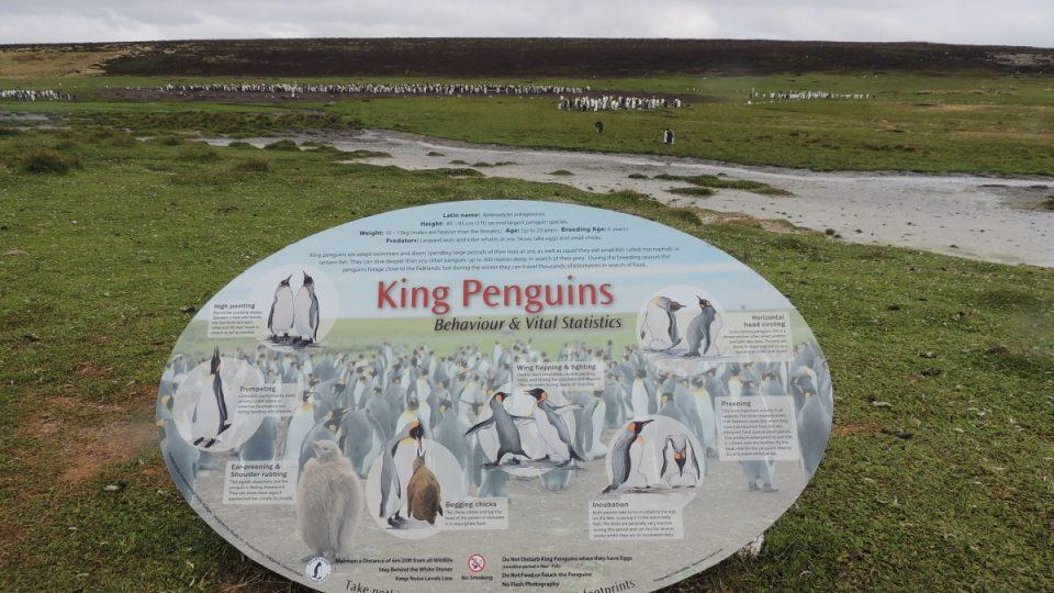 Kolonie tučňáků patagonských