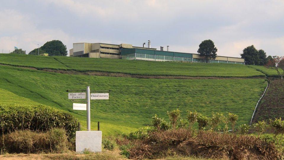 Továrna, kde se zpracovávají čajové listy, leží hned nad plantáží