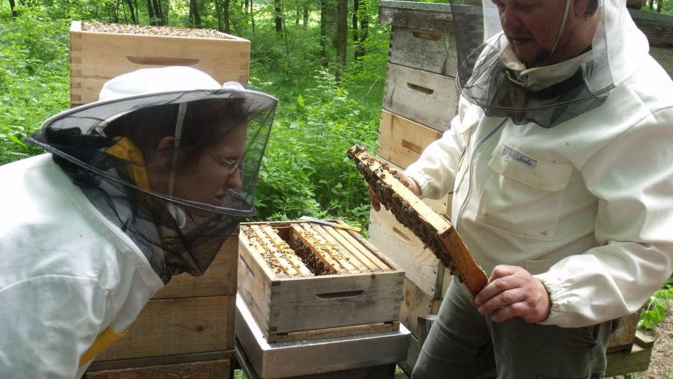 V České republice jsou pouze dvě školy, které nabízejí obor včelař