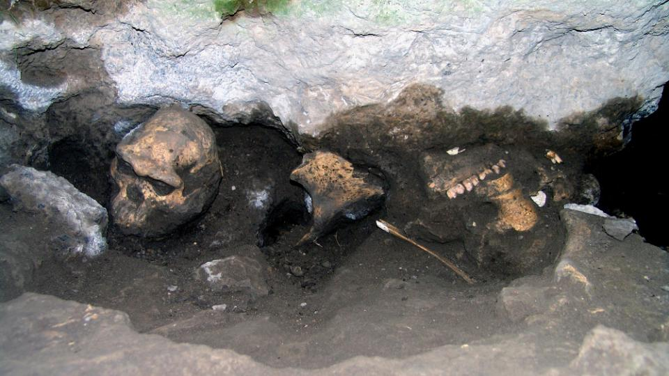 Poslední objevená lebka pravěkých lidí z Dmanisi. Vpravo od ní se nachází lebka pravěkého býložravce.