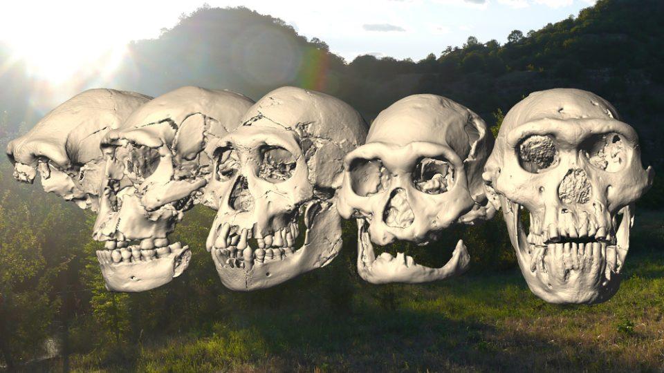 Pětice pravěkých lebek nalezených v gruzínském Dmanisi se od sebe dramaticky liší navzdory tomu, že jejich majitelé žili ve stejné době na jednom místě. Byli to představitelé jediného neuvěřitelně proměnlivého druhu pravěkého člověka.