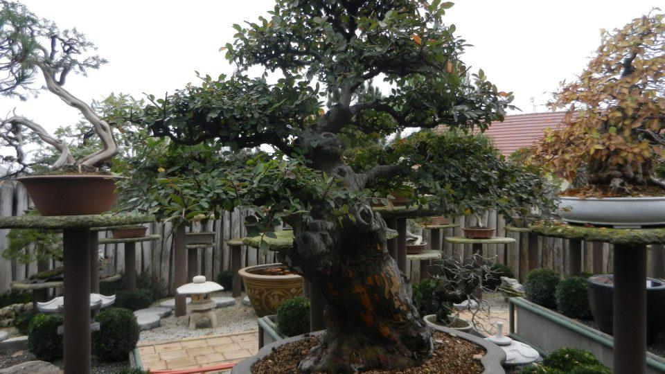 Muzeum bonsají ve Starém Městě u Uherského Hradiště