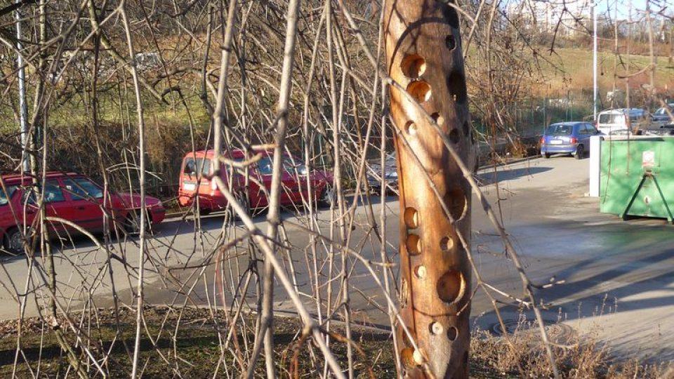 Krmítko - část silné větve s navrtanými otvory