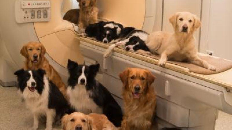 Psi, kteří zúčastnili výzkumu