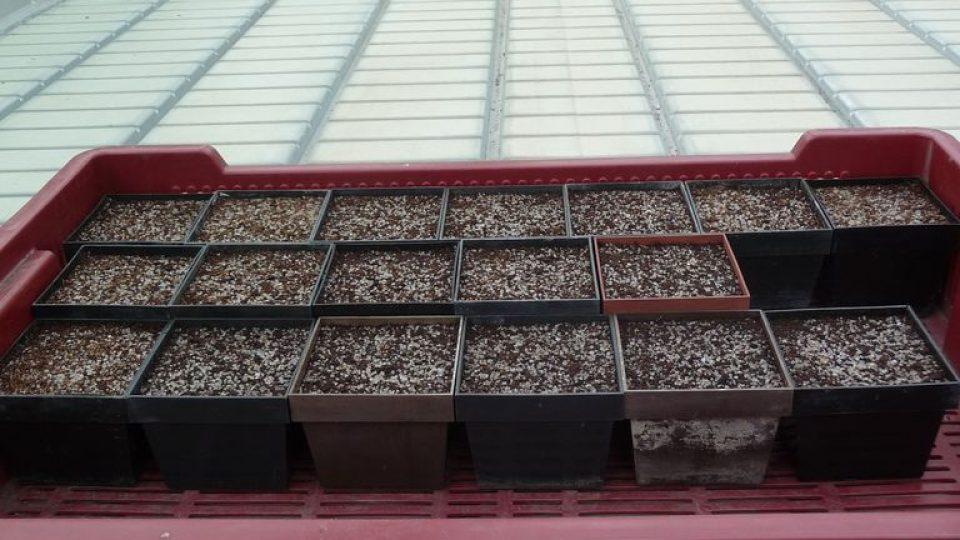 Misky se substrátem ve skleníku