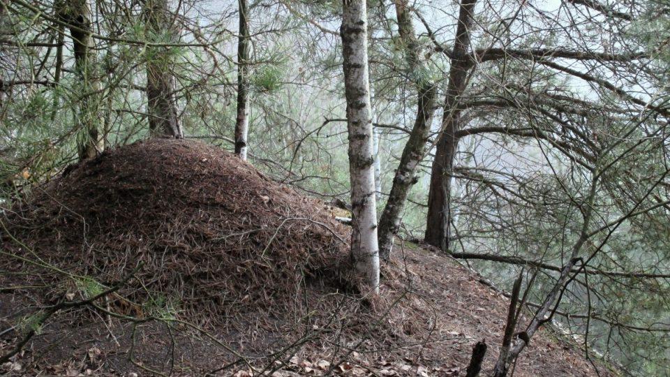 Okolí jezírka našli i mravenci