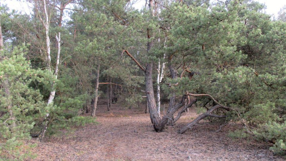 Přírodní bonsaje v okolí jezírka