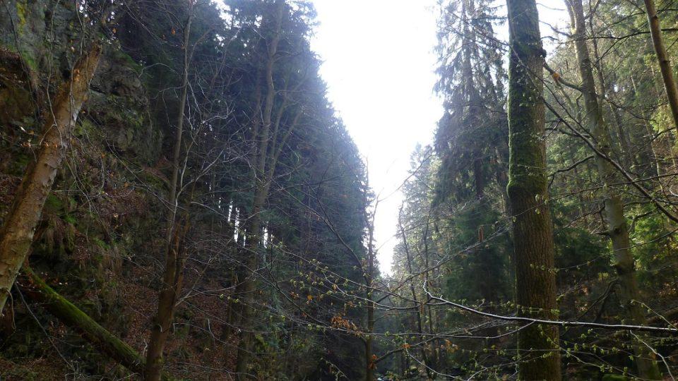Údolí Doubravky připomíná kaňon