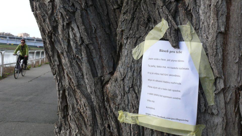 Báseň na stromě na 1. nábřeží v Českých Budějovicích