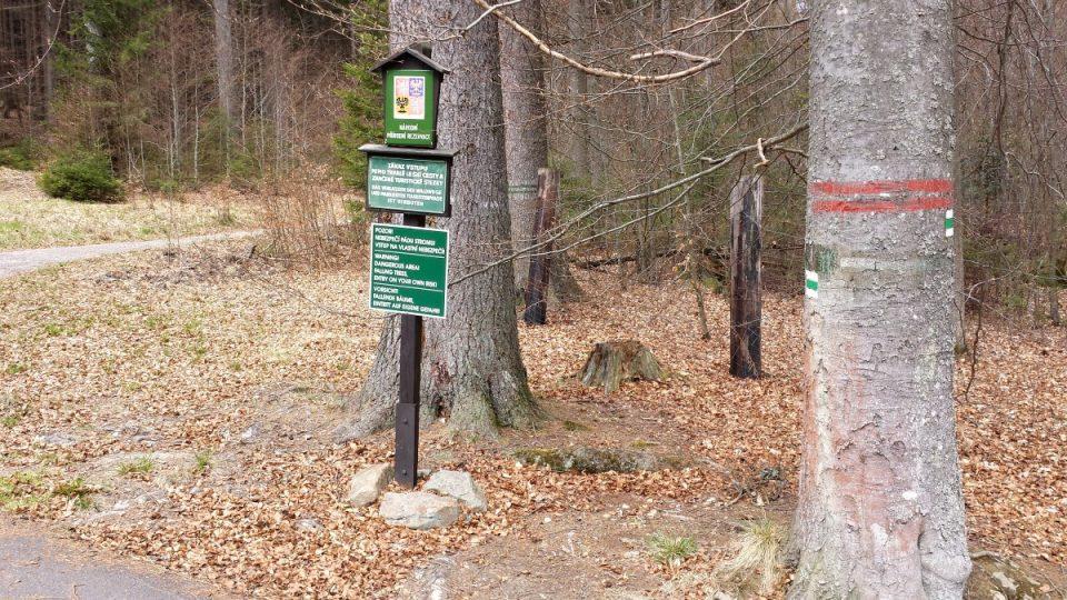 Boubínský prales - vstup