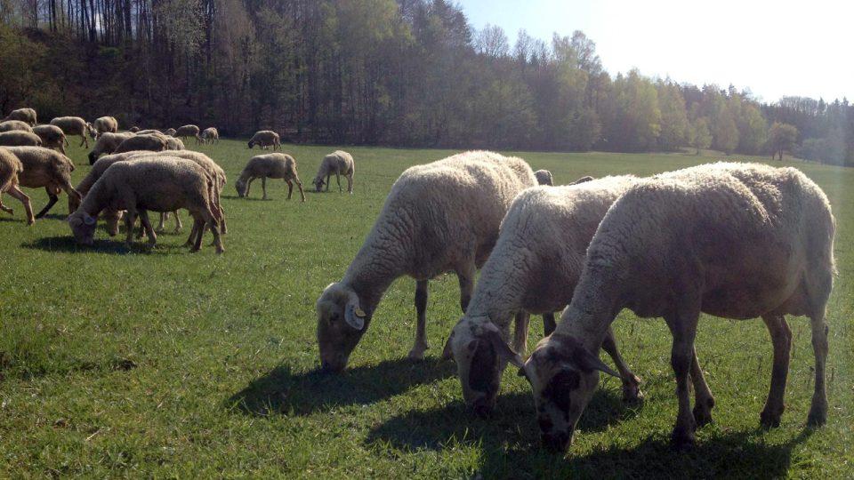 Čerstvý vzduch, ovce, žádný stres. Jak vypadá práce bači doopravdy?