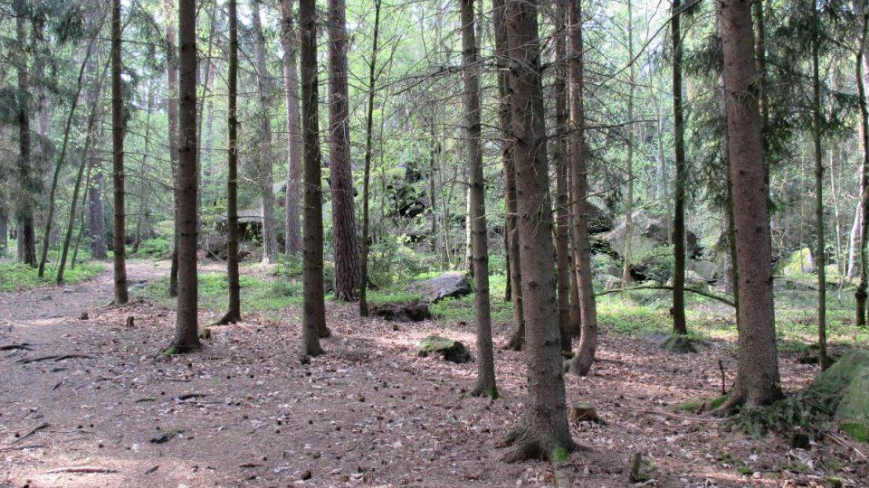 Přírodní památka Andrejšky ukrytá v lese