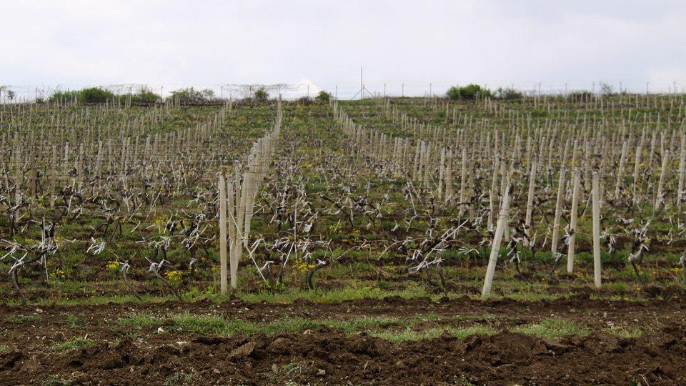 Vinařská tradice v Rahoveckém regionu sahá až do dob Římské říše