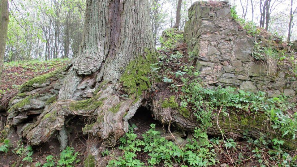 Okolní stromy pamatují mše