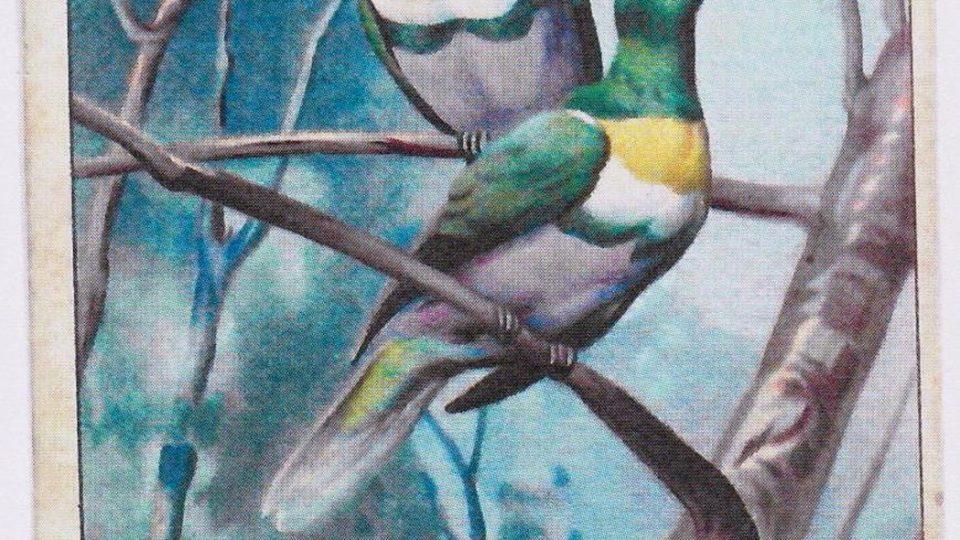 Reklamní litografická kartička - holub