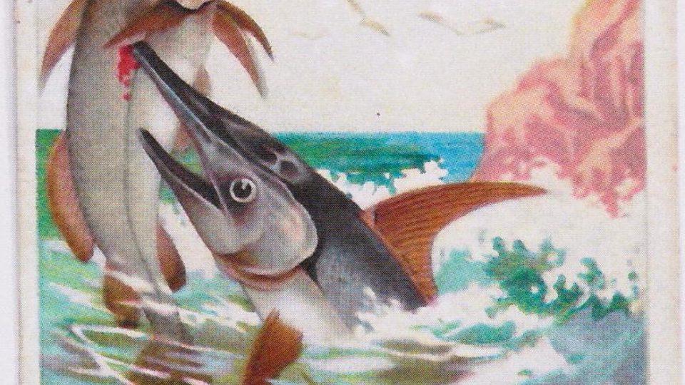 Reklamní litografická kartička - mečoun