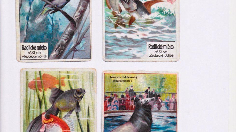 Reklamní litografické kartičky - přidávaly se k mléčným výrobkům a zákazníci je sbíraly