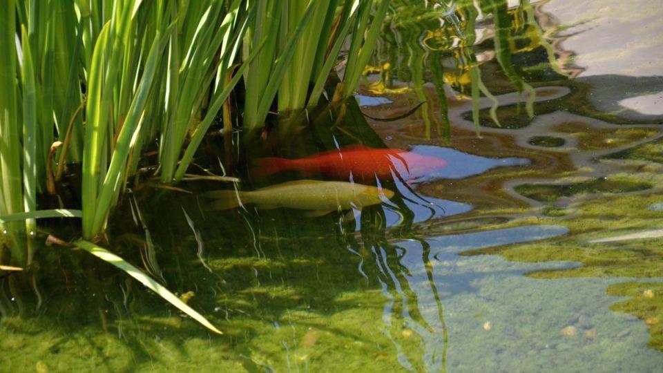 Ve velkém bazénu žije mnoho druhů ryb