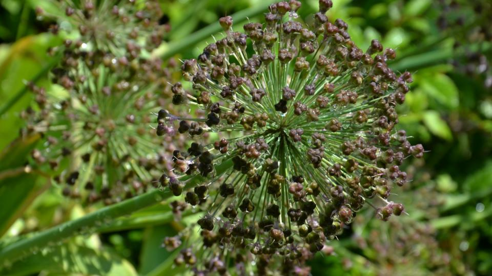 Do zahrady můžete přijít i s atlasem rostlin a objevovat nová jména