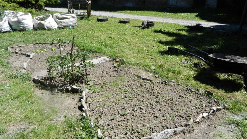 Komunitní zahrada Olomouc (záhonek z bývalé minigolfové dráhy)
