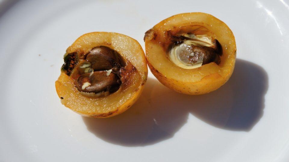 Rozkrojený plod mišpule