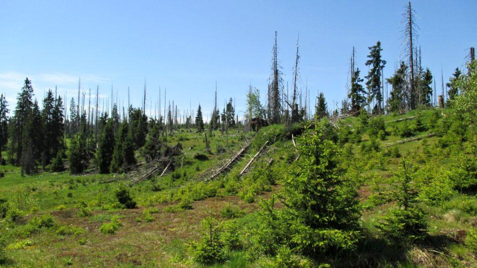 Kůrovec se na zdejších lesích hodně podepsal