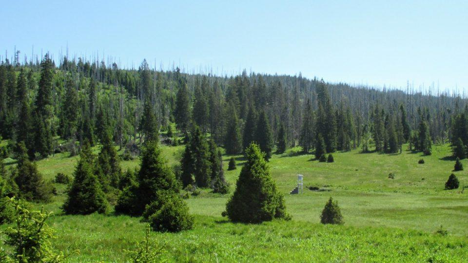 Mrazem modelované stromy - smrky jako v parku