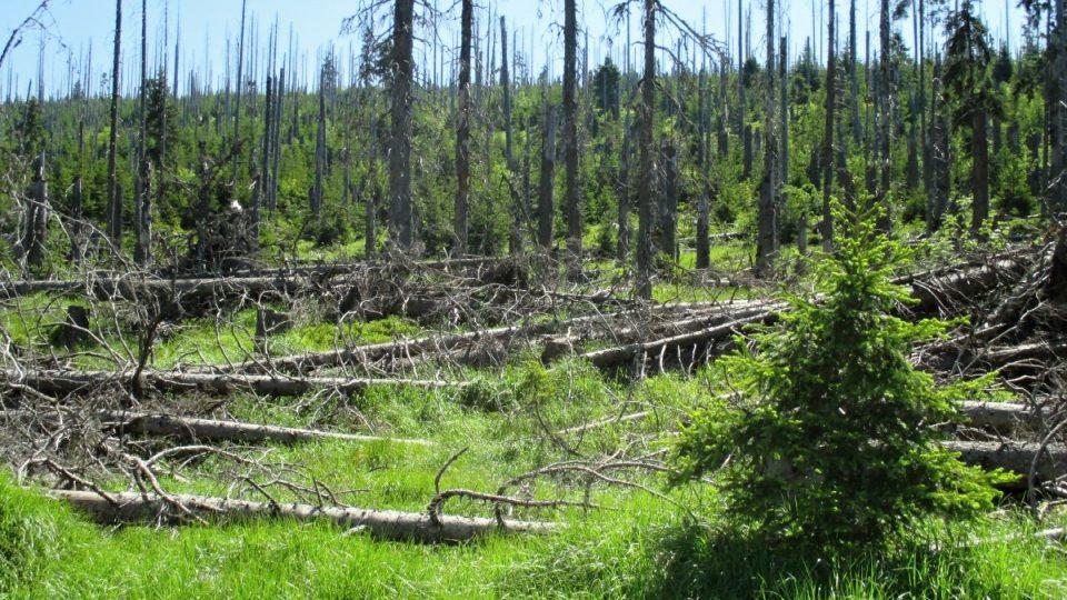 Pomalá přirozená obnova lesa