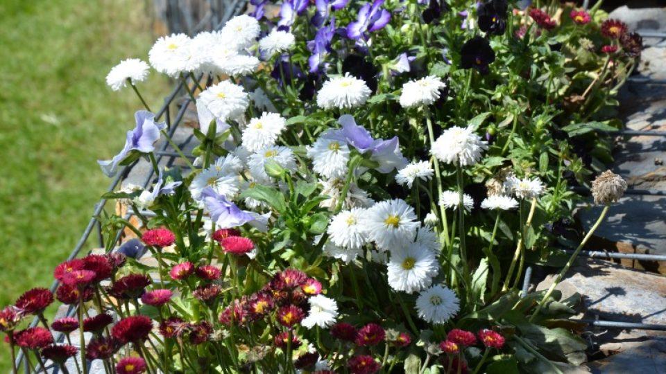 Truhlíkové rostliny pěstujeme pokud možno v samozavlažovacích nádobách