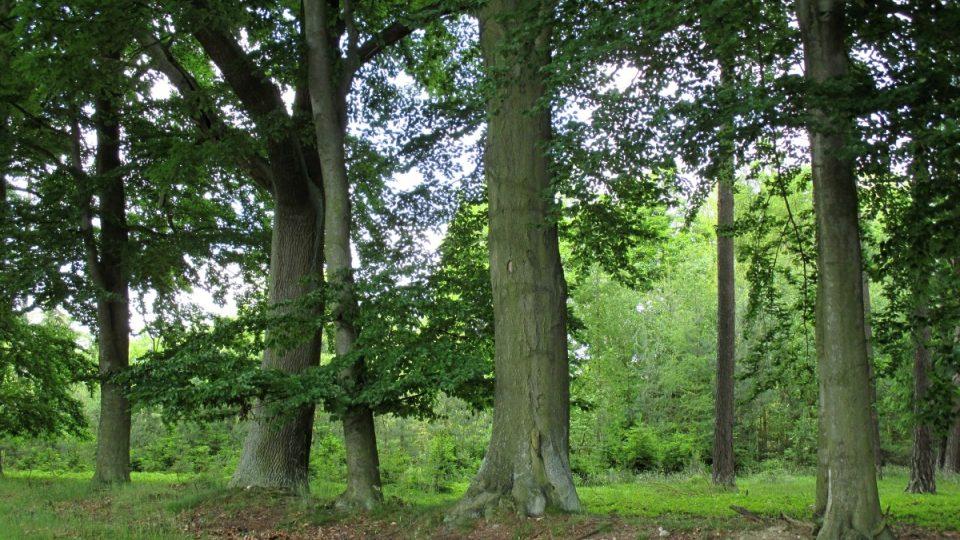 Duby v okolí umocňují klid