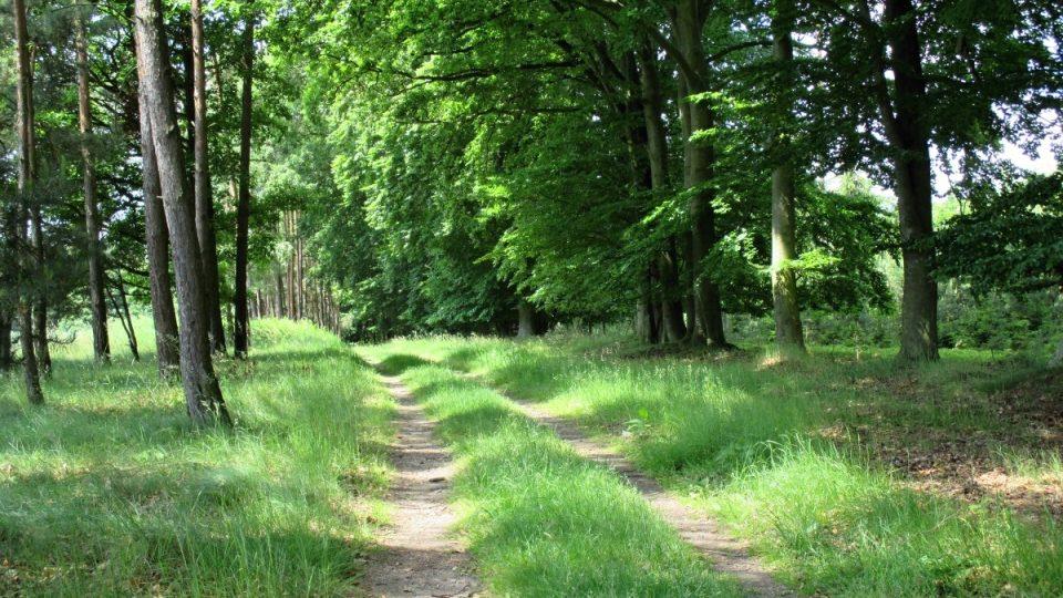 Okolí kopce Kosina láká k další procházce