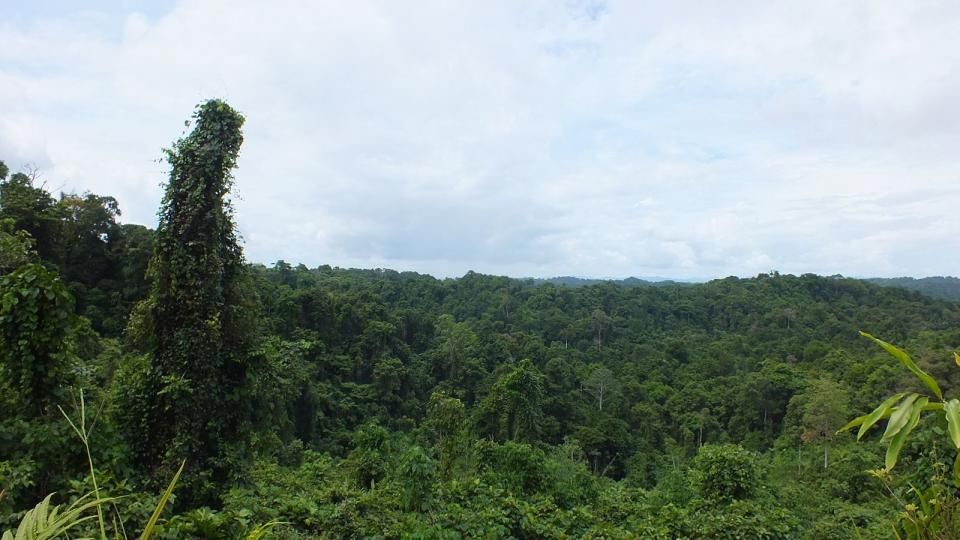 Papuánský prales