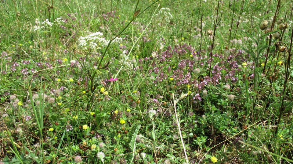 Čedičové podloží svědší řadě rostlin