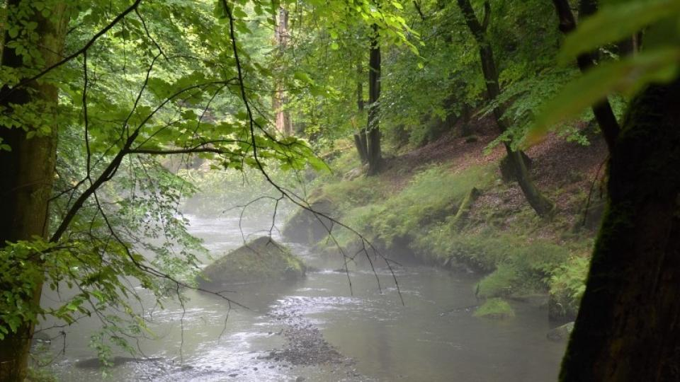 V lesích u vody bývá naděje na zaplněný košík
