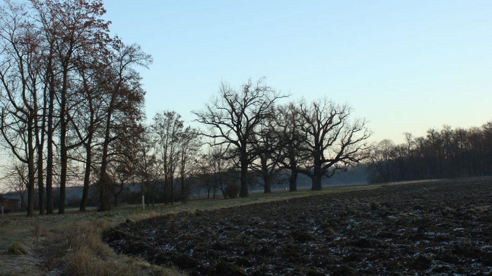 Zámecký park je ve stylu tzv. okrasného statku - součástí parku jsou i pole