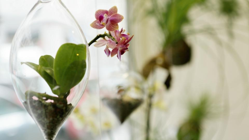 Aerárium s miniorchidejí