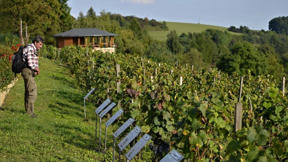Vinařská stezka v Kuksu