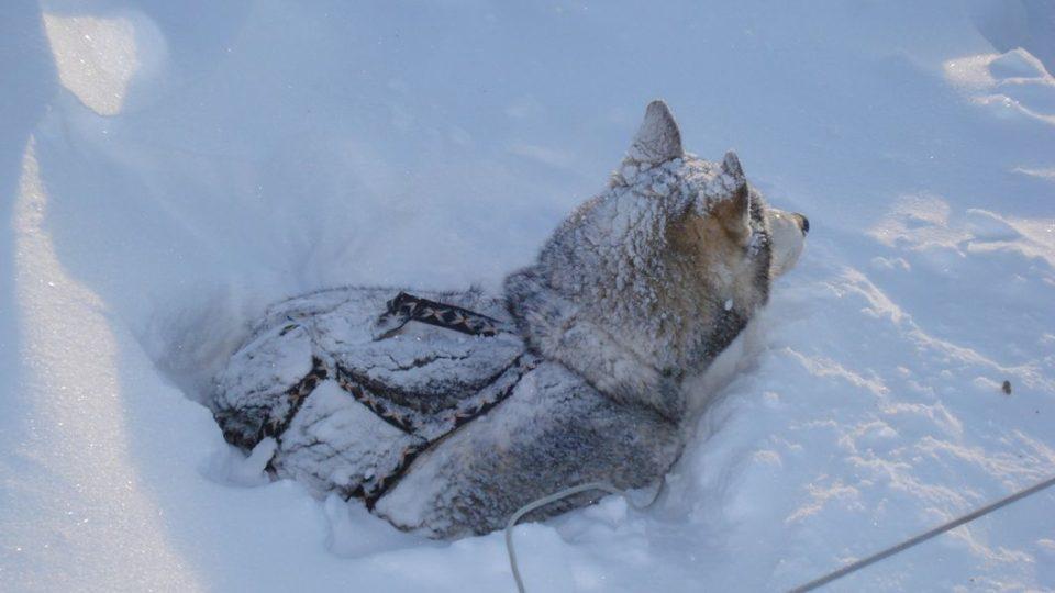 Psi jsou zvyklí spát venku i při velmi nízkých teplotách